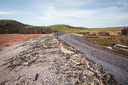 Driftwood collects on a tideline on Macleay Island on the Kimberley coast.