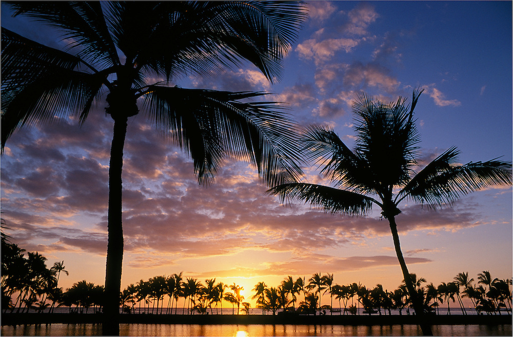 Coconut palm trees at sunset, Anaehoomalu Bay (Waikoloa beach resort), Kohala Coast, Island of Hawaii, with Ku'uali'i fishpond in foreground.