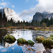 The granite monolith of El Capitan reflects in Merced River at Valley View. El Capitan rises 3000 feet (900 m) above Yosemite Valley floor to 7569 feet elevation in Yosemite National Park, California, USA. Rock climbers flock from around the world test themselves on the huge granitic face. Designated a World Heritage Site by UNESCO in 1984, Yosemite is internationally recognized for its spectacular granite cliffs, waterfalls, clear streams, Giant Sequoia groves, and biological diversity. 100 million years ago, El Capitan and the entire Sierra Nevada crystallized into granite from magma 5 miles underground. The range started uplifting 4 million years ago, and glaciers eroded the landscape seen today in Yosemite. Panorama stitched from 6 overlapping photos.
