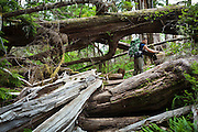 Henry Pedersen navigates a tangle of blowdown trees along the West Coast Trail, British Columbia, Canada.