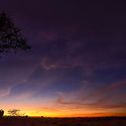 Panorama of an acacia tree at sunrise in Serengeti National Park, Tanzania.