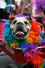 31jan16-Mardi Gras Dogs