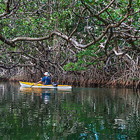 A kayaker paddling in a mangrove tunnel near Key Largo, Florida.