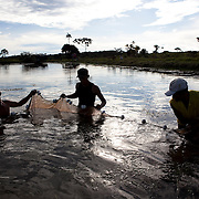 The Esteio, a sustainable fish farm owned by Ercio Luedke produces Amazonian fish for national distribution, Alta Floresta, Mato Grosso, Brazil, March 24, 2009. In the photo Ercio (shirtless) and some of his workers catching young Tambaqui (Colossoma macropomum). During the rainy season the Tambaqui feeds on fruits and seeds fallen from trees in the flooded rainforest.