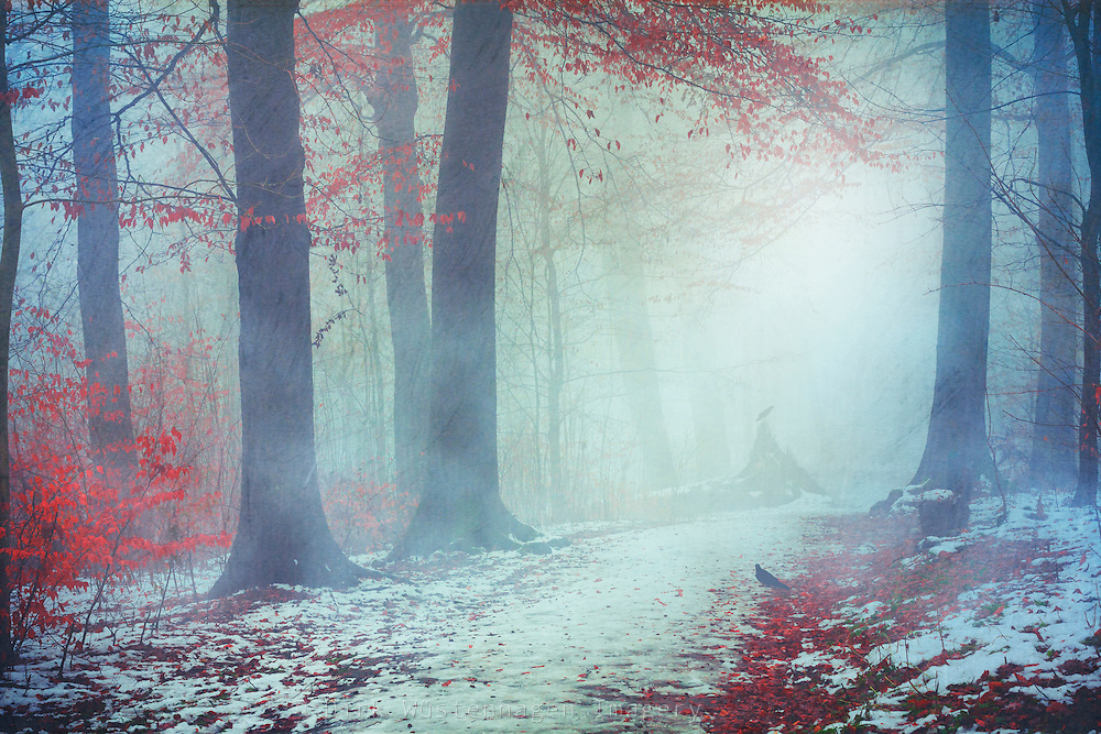Winter woodlands in mist - textured photograph<br /> S6 prints: https://society6.com/product/snow-glow96642_print#s6-6201100p4a1v45
