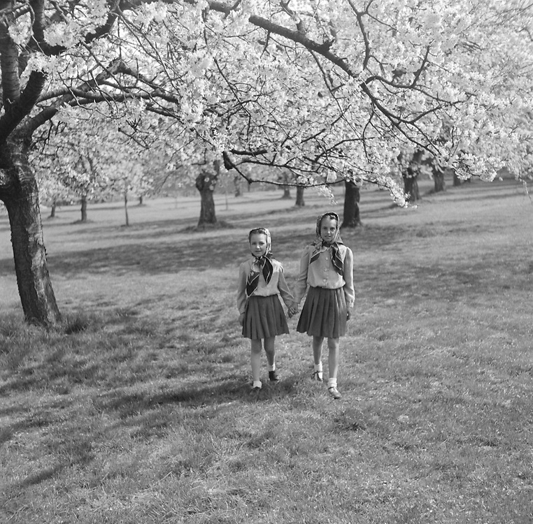 Children in Orchard, Horsmonden, Kent, 1935