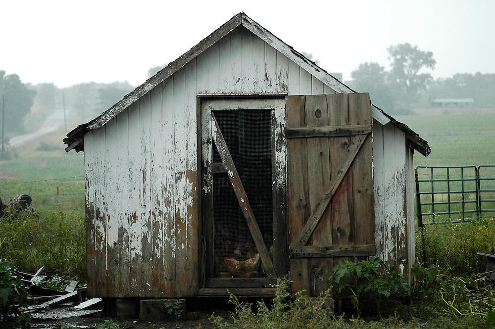 Poulailler. Les Petersheim, install&eacute;s comt&eacute; de Clark depuis quatre g&eacute;n&eacute;rations, ont onze enfants de 5 &agrave; 23 ans. Pendant l'&eacute;t&eacute;, alors qu'il n'y a pas &eacute;cole, tous prennent part aux activit&eacute;s quotidiennes de la ferme et des r&eacute;coltes. Sur leur exploitation de 162 hectares, la taille moyenne d'une ferme Amish, ils cultivent de l'avoine, du bl&eacute;, du ma&iuml;s, du soja, du sorgo et du millet en suivant des techniques &eacute;cologiques traditionnelles. Ils ont &eacute;galement 40 chevaux, 25 vaches et un petit &eacute;levage de poules et cochons.<br /> <br /> Hen house. The Petersheim, established in Clark county since four generations, have eleven children from 5 to 23 years old. During the summer, whereas the school is closed, all take part in the daily activities of the farm and with harvests. On their exploitation of 162 hectares, average size of an Amish farm, they cultivate oat, wheat, corn, soy beens, sorgo and millet following ecological techniques. They also have 40 horses, 25 cows and a small breeding of hen and pigs.