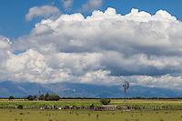 MOLINO DE AGUA CON VACAS, CULTIVOS Y SIERRAS AL FONDO, TRASLASIERRA, MINA CLAVERO, PROVINCIA DE CORDOBA, ARGENTINA (PHOTO © MARCO GUOLI - ALL RIGHTS RESERVED)