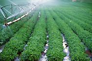 Peanut crop, irrigation, Oklahoma