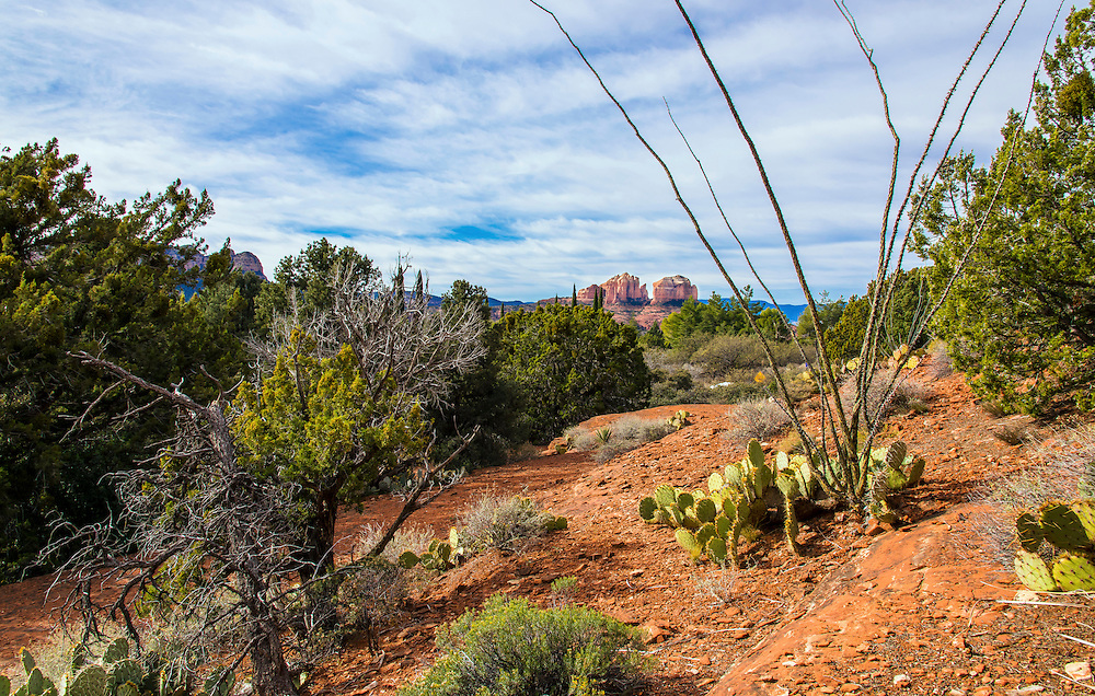A secne in the heart of picturesque Sedona. Far in the background, The Cathedral Red Rock can be seen.  Sedona, Arizona.