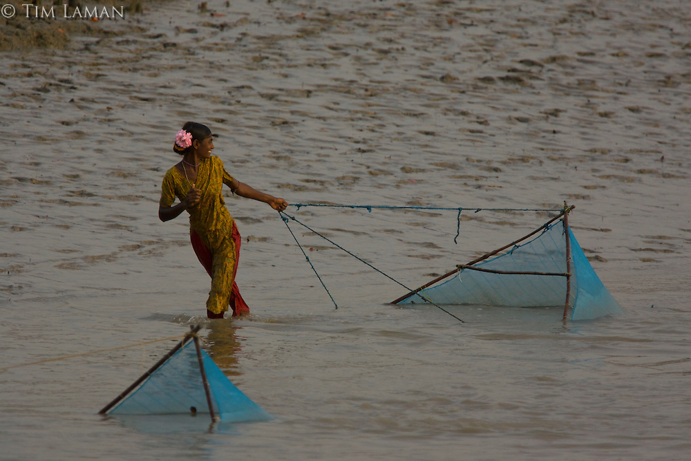Women pulling shrimp fry collecting nets along the shallows of the Kholpatura River.