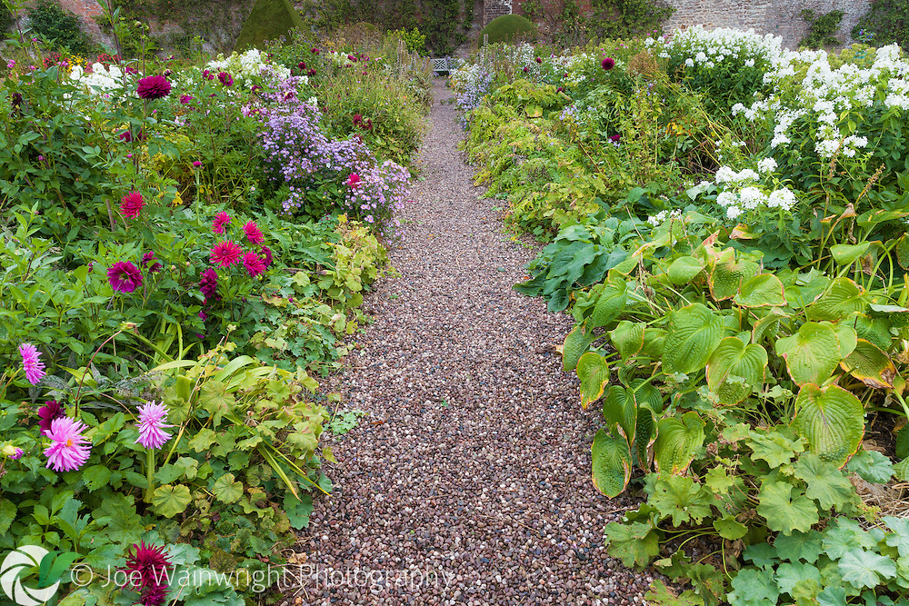 Dahlias and asters bring late colour to an October border at Hutton-in-the-Forest, Cumbria - photographed in October