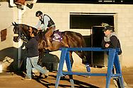 Trainer John Shirreffs with Zenyatta at Hollywood Park, Inglewood Ca. October22, 2008.