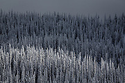 Scenic photo of snow covered trees in the mountains of the Kootenay Region of Interior BC near Nelson and Baldface Lodge