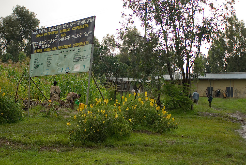 La coopérative de Quhar, dans la région Amhara, est le point de vente des semences et engrais et lieu de préparation des récoltes destinées au marché national. Une source d'eau est également à disposition. Éthiopie août 2011.