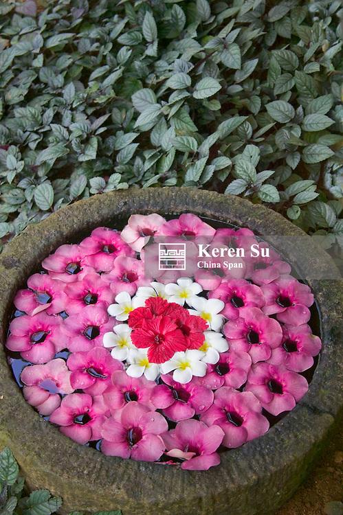 Flower pot decoration inside house, Kerala, India