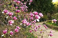 France, Languedoc Roussillon, Gard, Cevennes, Anduze, Prafrance, Générargues, La Bambouseraie, Pleioblastus distichus (poaceae) en fleurs