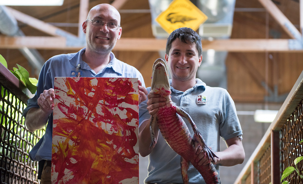 rer031617m/Life/03.16.2017/Roberto E. Rosales <br /> Bob Gedraitis, left, senior reptile keeper at the ABQ BioPark Zoo, shows the art created by American alligator &quot;The Kraken,&quot; who is being carefully held by reptile keeper Landie Romero(Cq). <br /> Albuquerque, New Mexico(Roberto E. Rosales/Albuquerque Journal)