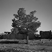 A view of a tree outside Osama Bin Laden's compound at Tarnak Farms, the al Qaeda base, training camp and pre 9/11 al Qaeda headquarters in Kandahar, Afghanistan which served as a home to Osama Bin Laden and numerous al Qaeda fighters located outside Kandahar City. It is believed that this base was where the plan for the 9/11 attacks originated, as a result Tarnak Farms was heavily bombed by the United States after September 11, 2001. (Credit Image: © Louie Palu/ZUMA Press)