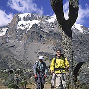 Greg Marshall walks through the Karanga Valley along the Machame Route on Mt. Kilimanjaro, Tanzania, below the great Western Breach Wall.