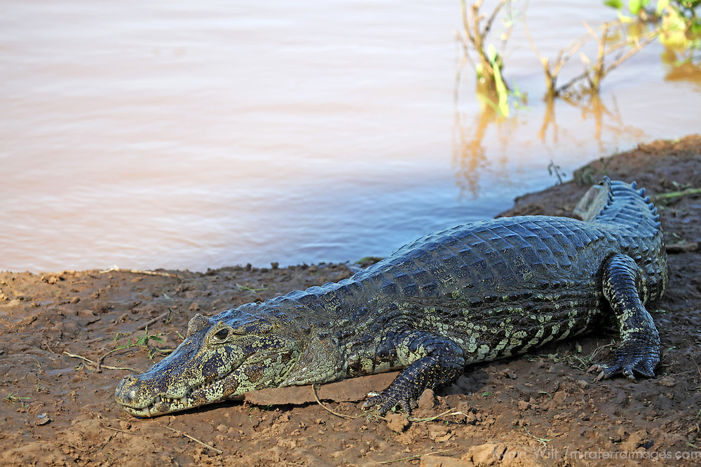 South America, Brazil, Pantanal.