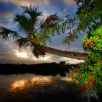 Sebastian River, Florida palm tree sunset