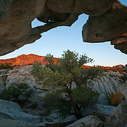 A large granite arch frames a pinyon pine as well as several prominent City of Rocks features, including Elephant Rock (at left) and the Bread Loaves (at right). This arch is part of Window Rock in the City of Rocks National Reserve in southern Idaho.