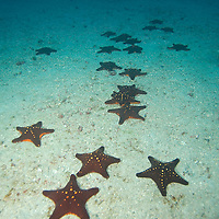 Congregation of Sea Stars
