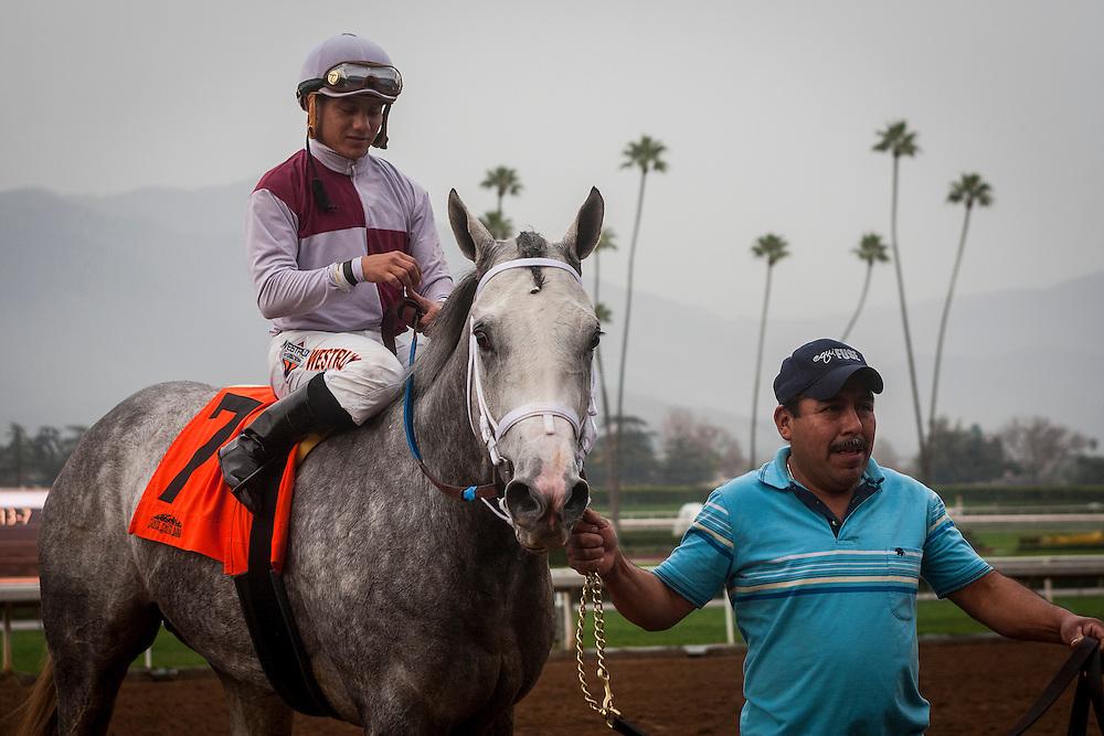 January 10 2014: Calculator with jockey Elvis Trujillo up wins the Sham Stakes GIII at Santa Anita Park in Arcadia CA. Alex Evers/ESW/CSM