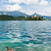 A mother duck leads four cute ducklings in a row on the rippled turquoise waters of Lake Bled, Slovenia, Europe. The town of Bled and glacially formed Lake Bled (Slovene: Blejsko jezero) are popular tourist sites in the Julian Alps in northwestern Slovenia. A medieval castle stands above the lake on the north shore, the former seat of the Austrian Bishops of Brixen. The lake surrounds Bled Island (Blejski otok, the only natural island in Slovenia), upon which stands the Pilgrimage Church of the Assumption of Mary (Slovenian: Cerkev Marijinega vnebovzetja), built in the 15th century and now popular for romantic weddings. Lake Bled hosted the World Rowing Championships in 1966, 1979, 1989, and 2011. The lake is 35 kilometers from Ljubljana International Airport.