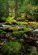 East Fork Bull River headwaters and old-growth western hemlock forest. Cabinet Mountains Wilderness Area, northwest Montana