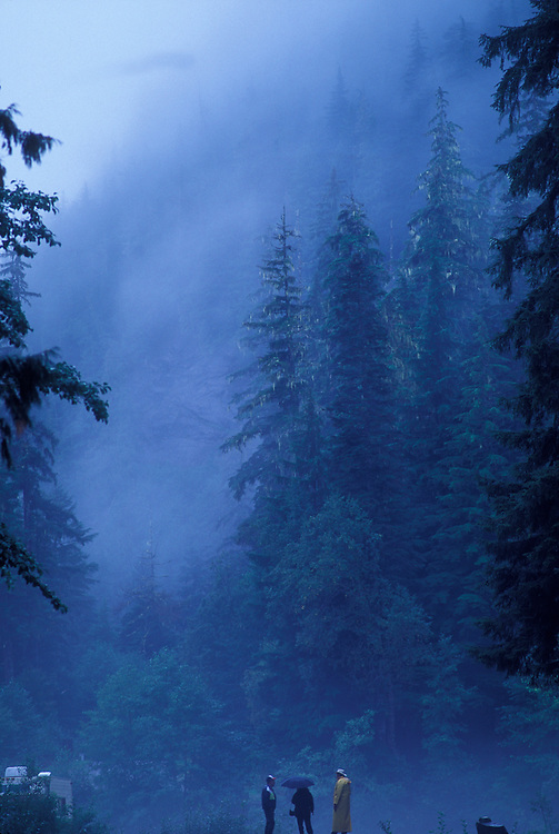 Canada, British Columbia, Exchampsiks Provincial Park, Mist rolls through coastal rainforest on autumn evening