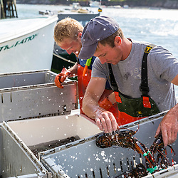 "Captain Matt Clemmons (front) and sternman Collin Grady unload lobster aboard ""Mean Kathleen"" at Potts Harbor Lobster in Harpswell, Maine."