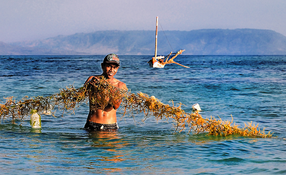 A seaweed farmer checking the growth on a line off Bean beach on Lembata Island, Indonesia.