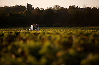 The Medoc region surrounding Bordeaux on the Garonne river in France, is one of the greatest wine producing regions in the world, with around 1,500 vineyards. <br /> Within the appellation of St Julien lies Chateau Leoville Barton, The proprietor of which is the charming Irish gent Anthony Barton. The Bartons have been producing wine in the region since 1722 when Thomas Barton settled in Bordeaux from his native Ireland. It wasn't until the early 1820's, however, when his grandson Hugh Baron purchased Chateau Langoa and shortly afterwards acquired a portion of the Leoville estate, now known as Chateaux Langoa and L&eacute;oville Barton respectively, that the Bartons  really established themselves as one of the great wine producers of the region. <br /> Anthony Barton took control in 1984, having lived in Bordeaux since the early 50's when he moved from Ireland. The Bartons have been at Langoa Barton now for 200 years, making it the longest period of single family ownership of any of the Chateau's in the Bordeaux region. Stictly speaking there is actually no chateau at Leoville Barton as it was only a portion of a much larger estate, so the cellars of Langoa Barton are used to make the wines of both properties. <br /> Admirably, it has been Anthony Bartons aim to produce extremely high quality wines in the classic St Julien tradition and to release them at a reasonable price. He believes that wine is to be drunk, not viewed as an investment opportunity. If you ask him how long a vintage will last he replies with a sardonic grin that &quot;it will last until you drink it&quot;. It was in the 80's under Anthony Barton's supervision that the quality of the wines produced at Leoville Barton dramatically improved from an average second growth classification wine (still a very highly rated wine) to being consistently exceptionally highly rated, in fact many think it behaves like a first growth wine.