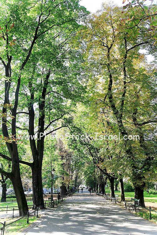 Green urban park. Photographed in Krakow, Poland