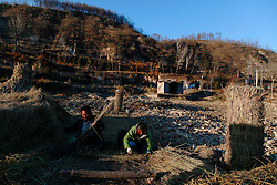 A picture made available on 06 November 2012 of Chinese farmers making straw mats outside their cave homes or 'yaodongs' in the rural outskirts of Yan'an city, Shaanxi Province China, 05 November 2012. The 'yadong' or cave dwellings are typical in the plateaus of northern China in Shaanxi Province where many of Yan'an's rural population still live in. They are mostly carved out from the yellow earth of the Loess hillsides and are about seven to eight metres deep with height and width of three metres. Former Communist leader Mao Zedong and his comrades are known to have hid in these cave homes during the civil war between the communists and nationalists in 1936 to 1948 as they battle the Kuomintang forces. Chao has lived in his cave home in the Loess mountains of Yan'an for more than 60 years, mostly in poverty and hardship as a farmer and was one of the few to have lived through the period of turmoil during the civil war between the nationalists and communists led by former leader Mao Zedong in the 1940s. China's new leaders slated to take over during the 18th National Congress beginning on 08 November are likely to face mounting pressures to tackle the country's rising income inequalities between urban and rural areas that are often the source of simmering resentment and growing unrests on the grassroot level.
