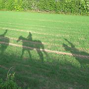 Horses - Hester