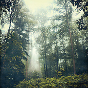 Forest in hazy morning light<br /> REDBUBBLE Products: http://www.redbubble.com/people/dyrkwyst/works/23166234-jungle-ii?asc=u&amp;ref=recent-owner