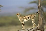 Roy Toft Photo Safaris Print Collection