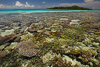 Very low tide reveals the coral reef from above the surface..Exploratory dive trip with Max Amar, Gerry and Mark Allen.