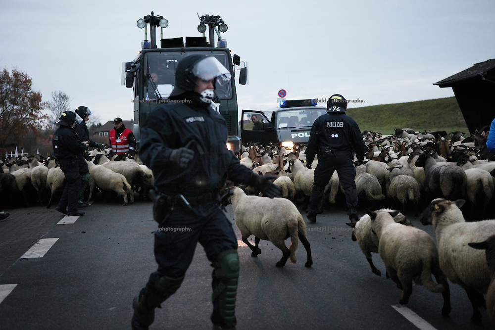 Unrest in Lüchow-Dannenberg. A herd of about 1000 sheeps are lead onto a street and blocks a police column. Thousands of people demonstrate against a transport of 11 Castor containers filled with high radioactive waste to Gorleben, Lower Saxony, Germany. The protest takes place shortly after the governments unpopular decision to extend the period of operation for german nuclear power plants for an additional decade.