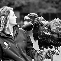 Eagle and keeper at sanctuary
