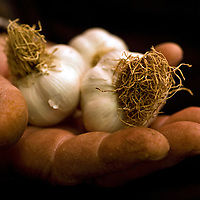 Taskopru garlic, Kastumonu, Turkey