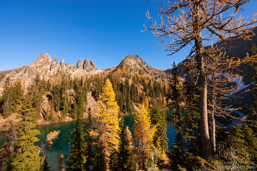 Golden Larch trees (Pseudolarix amabilis) at the peak of their fall color frame Blue Lake and several peaks near Washington Pass in the North Cascades of Washington state. Golden Larches, while not considered true larches, are known for shedding their needles each fall. The needles grow back each spring and transition from deep green to blue green over the course of the summer. In late September or early October, the needles turn golden and drop, just like the leaves on deciduous trees. Of the mountains in the cluster at left, Liberty Bell Mountain is the leftmost peak; the Early Winters Spires are the tight cluster of three peaks at the center of the mountains shown.
