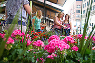 Michelle Smith and Mackenzie Evenson, center and right, look through the floral selection at the Lowertown Farmers Market, Saturday, May 31, 2014. [ BEN BREWER • Special to the Star Tribune _ Assignments #  20034753A  DATE: May 31, 2014 SLUG: greenline.vita EXTRA INFORMATION: