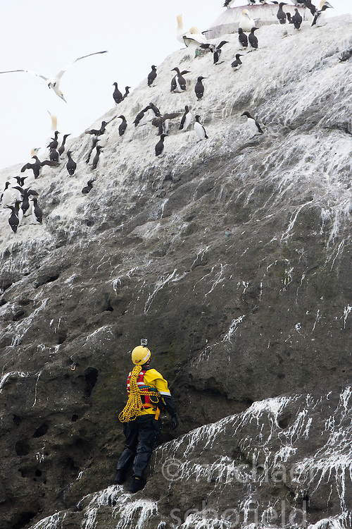 Nick Hancock (yellow) climbs up to the top of Rockall, for his reconnaissance mission for a future 60 day occupation of Rockall. The Rockall Jubilee Expedition, a unique endurance expedition to be undertaken by Nick, in order to raise funds for Help for Heroes .©Michael Schofield..