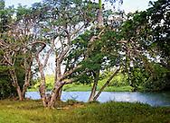 Laguna de la Leche near Moron, Ciego de Avila, Cuba.