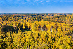 View from Mäekonnu tower in Võru county, Estonia. Yellow colorful trees, forest.