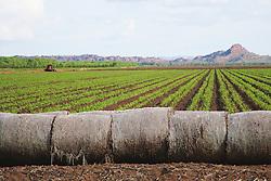 The Ord Irrigation Scheme, stage 1, near Kununurra.